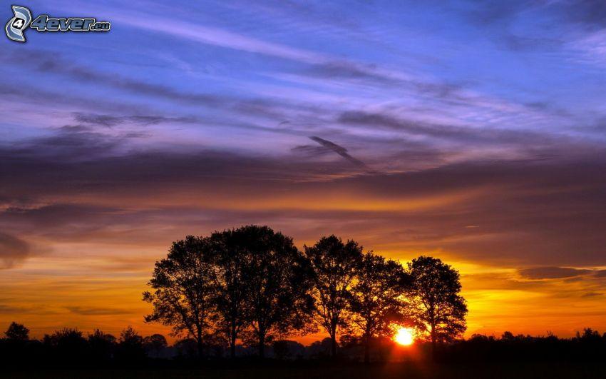 tramonto dietro un albero, siluette di alberi, cielo di sera
