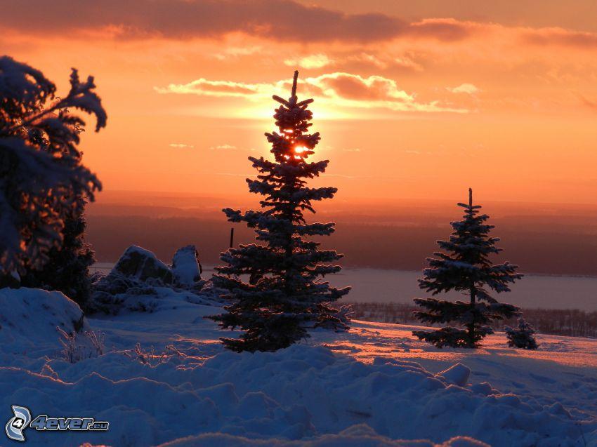 tramonto invernale, alberi coperti di neve, tramonto dietro un albero, neve
