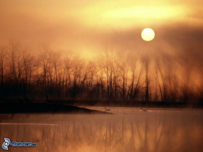 tramonto sopra il lago, siluette di alberi, sole debole