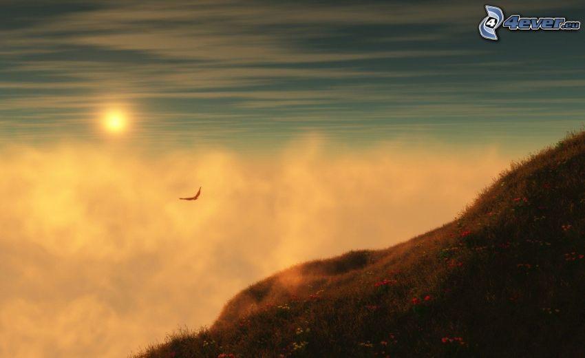 Tramonto sopra le nuvole, collina, uccello rapace