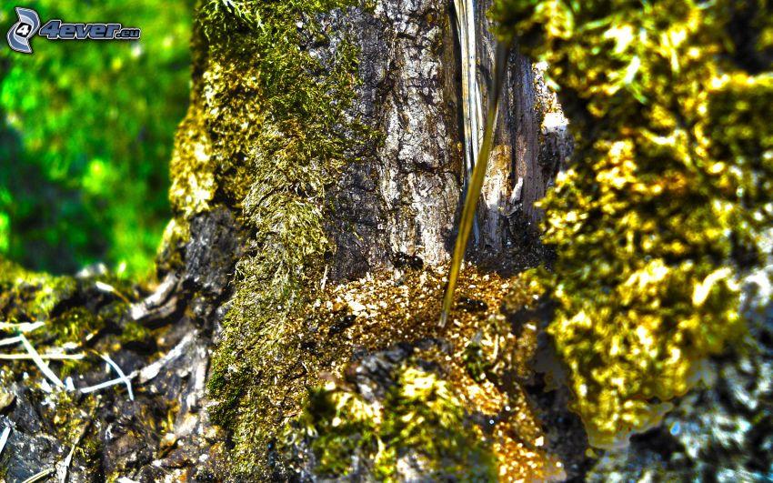 tronco, formiche