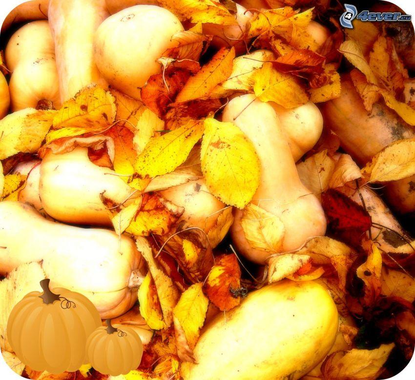 Zucche, autunno, foglie secche