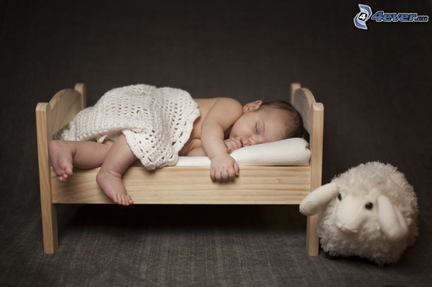 bambino che dorme, pecora
