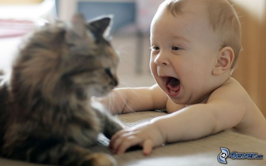 bambino e gatto, urlo