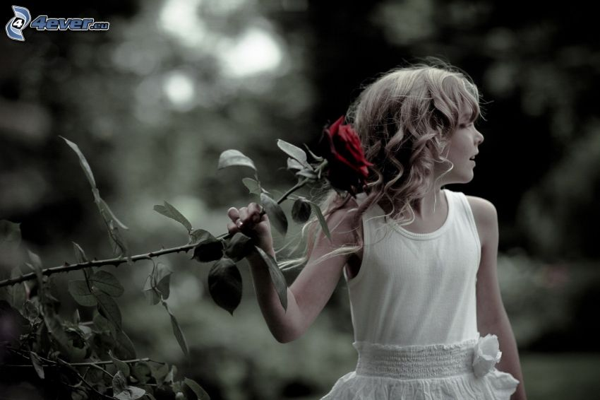 ragazza, rosa rossa
