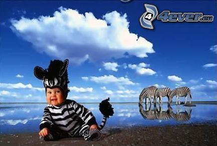 zebra, bambino