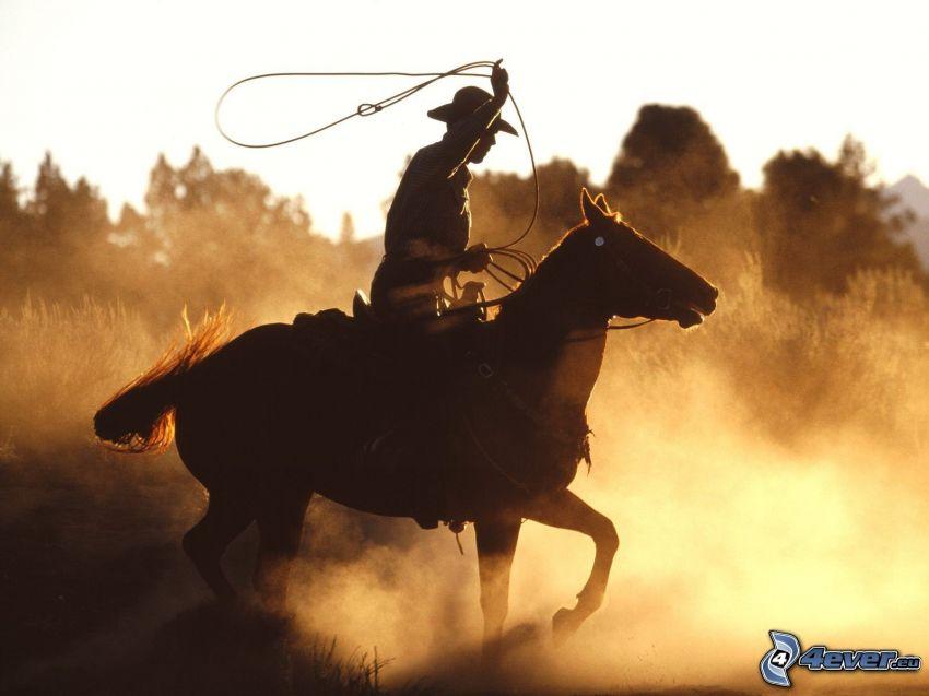 cavallo, cowboy, cavaliere