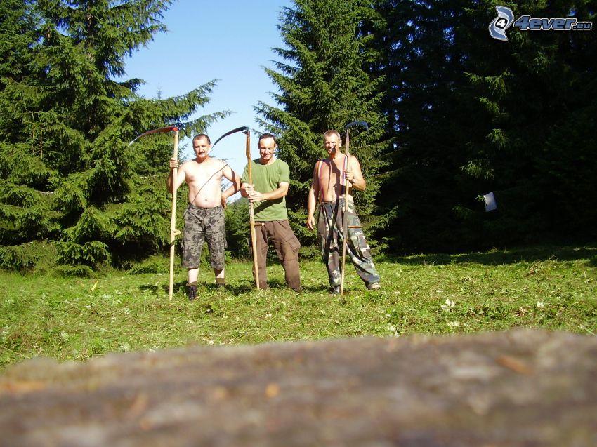 uomini, falciatore, falce, alberi di conifere, foresta, l'erba