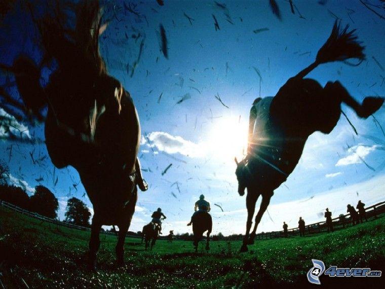 cavalli, corse di cavalli