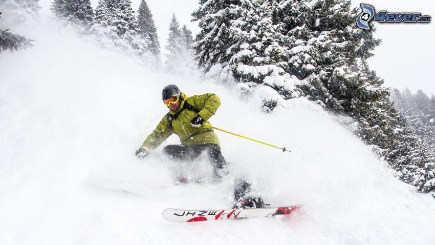 sci, alberi coperti di neve