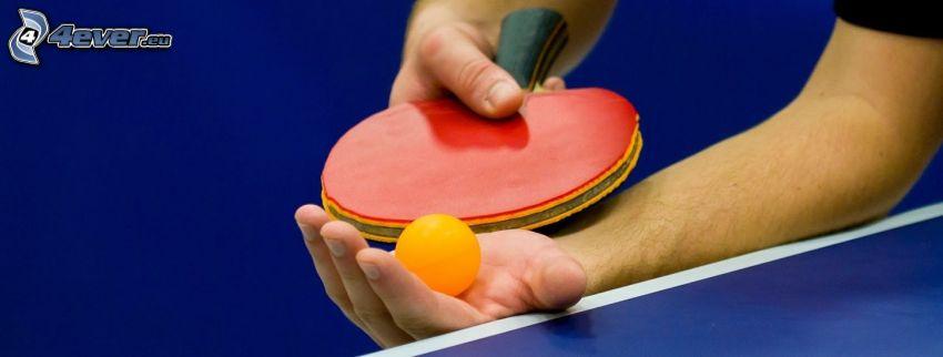 tennistavolo, racchetta, palla, mani