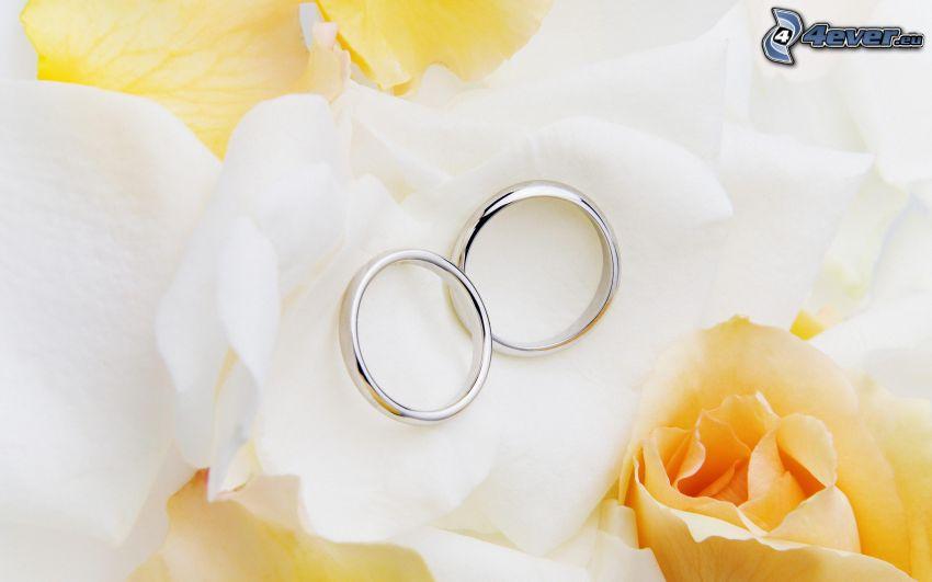 anelli di nozze, rose gialle, petali