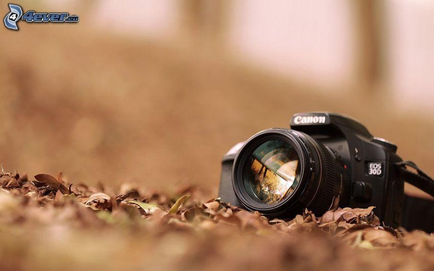 Canon EOS 30D, foglie secche