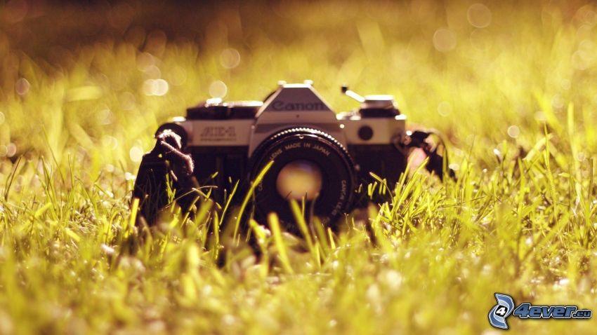 fotocamera, l'erba