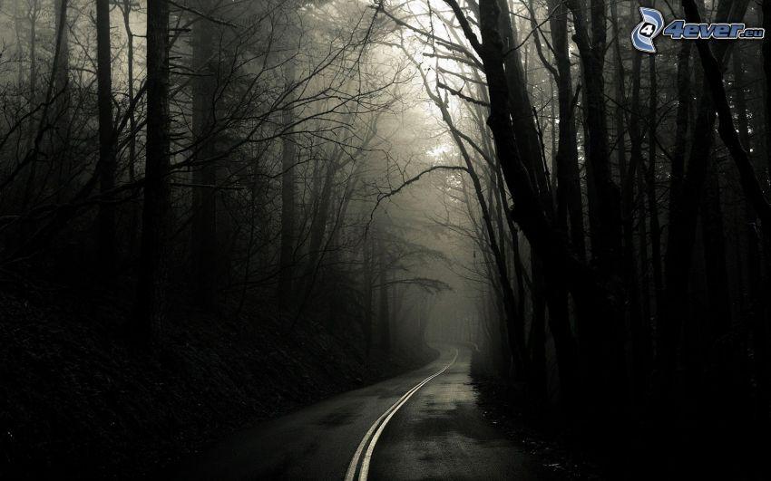 il percorso attraverso il bosco, strada, foresta