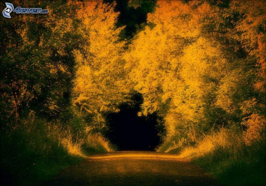 il percorso attraverso il bosco