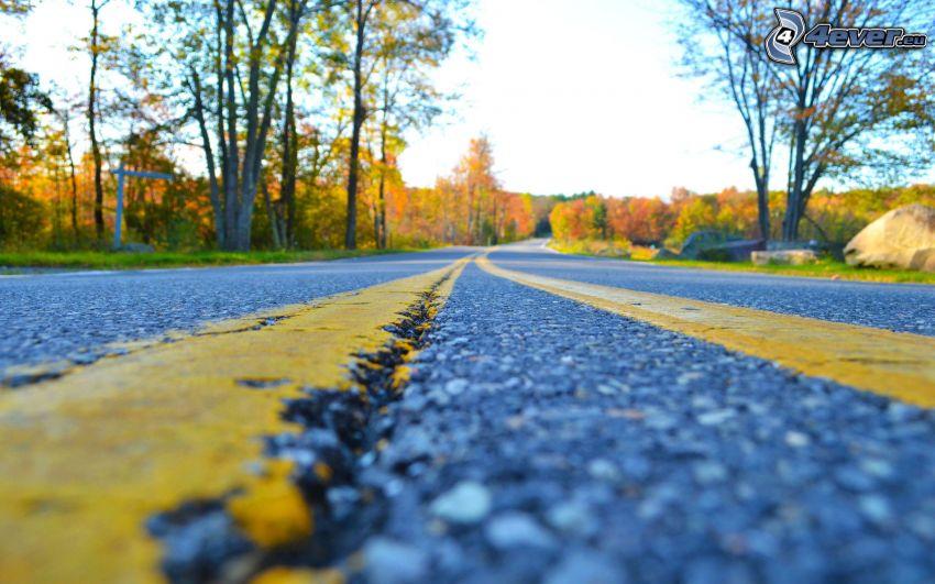 strada, bosco autannale