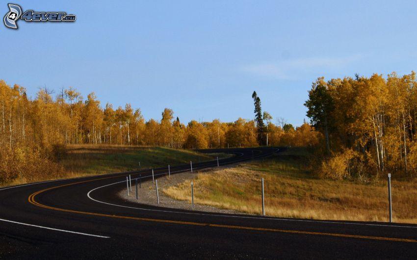 strada, curva, alberi