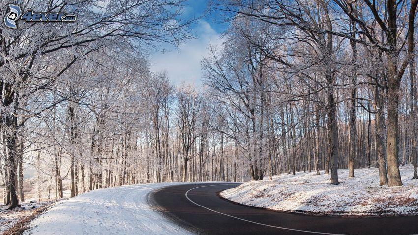 strada, curva, alberi coperti di neve