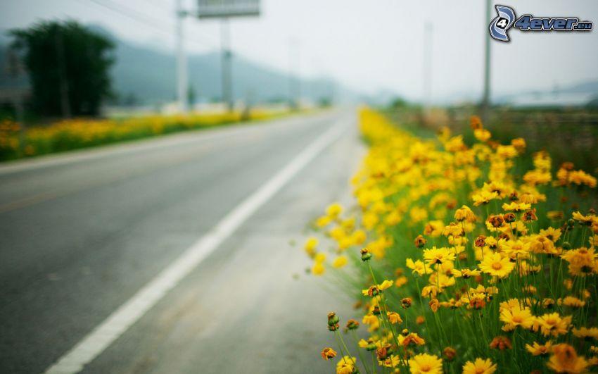 strada, fiori
