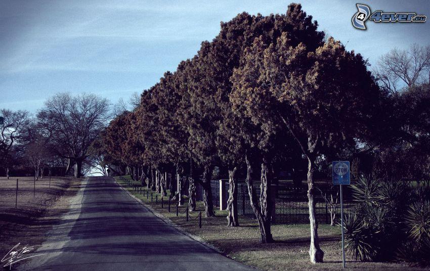 strada, viale albero