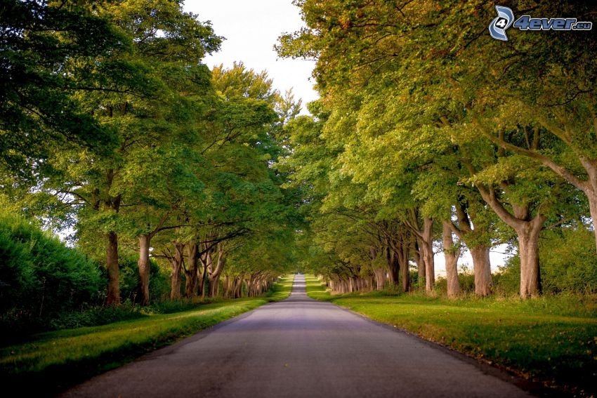 strada diritta, viale albero