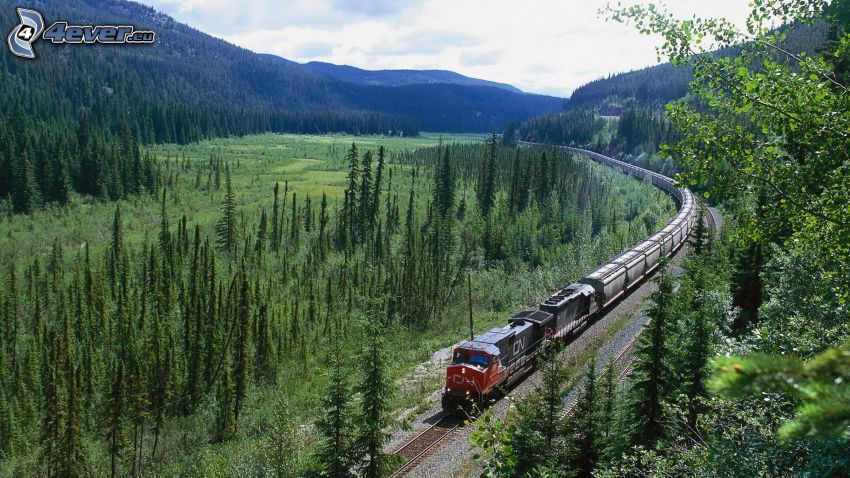 treno merci, foresta, prato