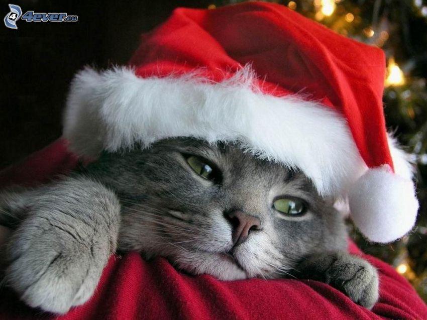 gattino di Natale, cappello di babbo natale, Babbo Natale, natale
