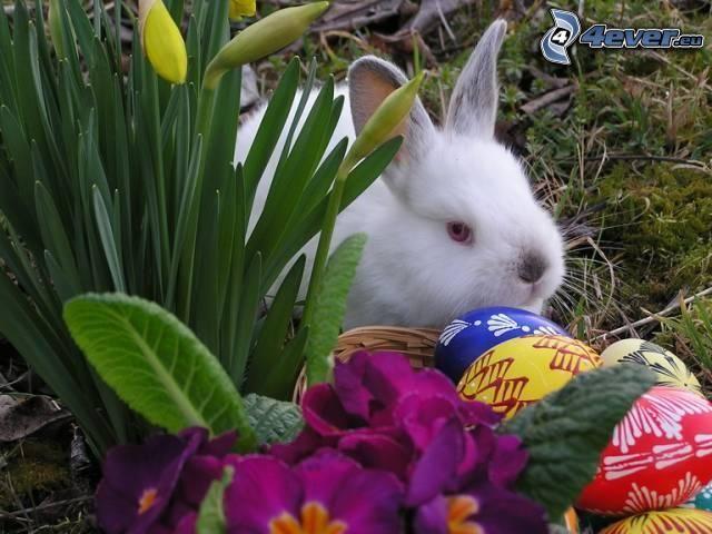 coniglio, fiori viola, uova dipinte