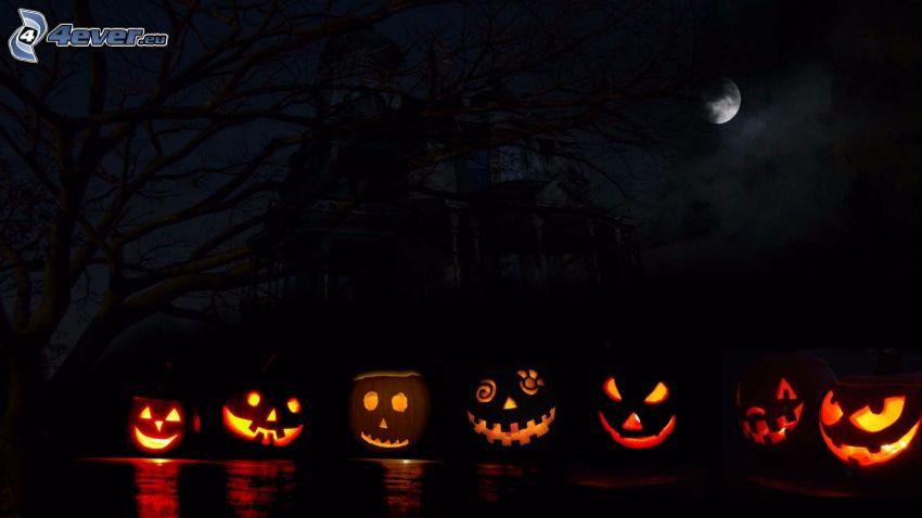 Zucche di Halloween, notte, luna