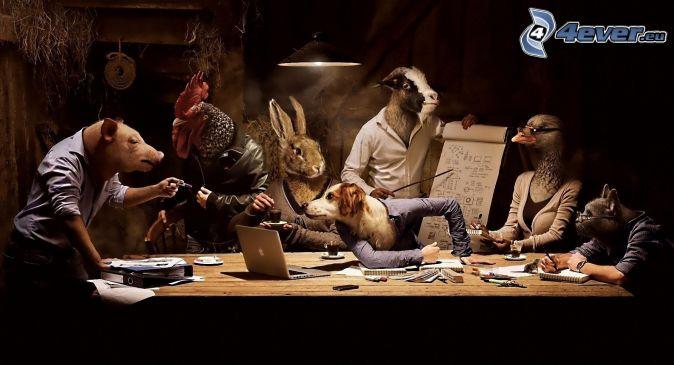 állatok, iskolázás