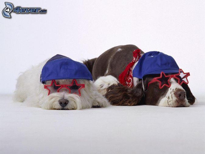 két kutya, szemüveg, sildes sapkák