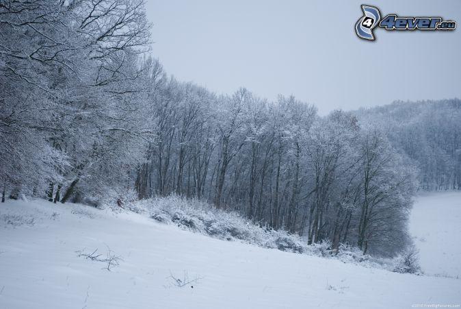 havas fák, havas rét