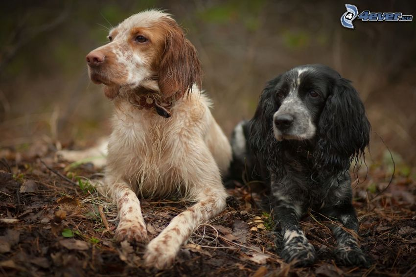 két kutya