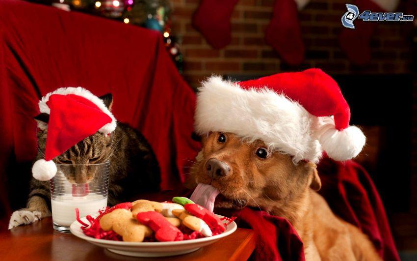 kutya és macska, mikulás sapka, tej, étel