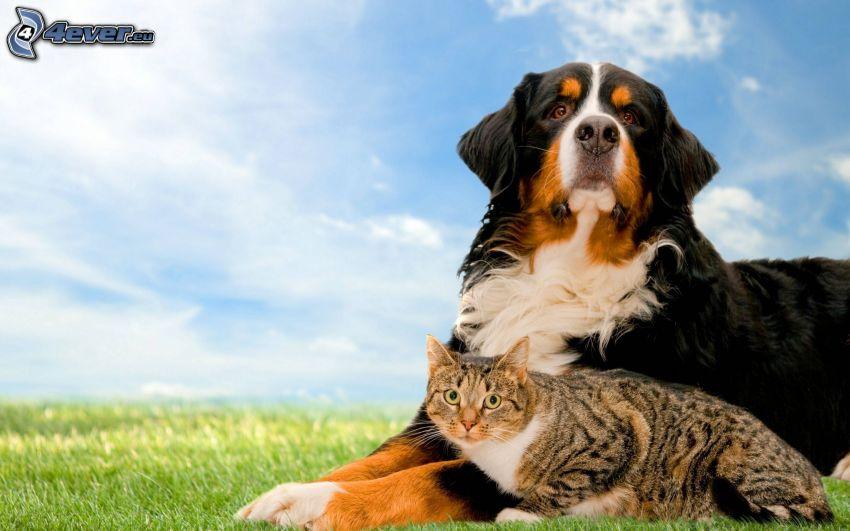 kutya és macska