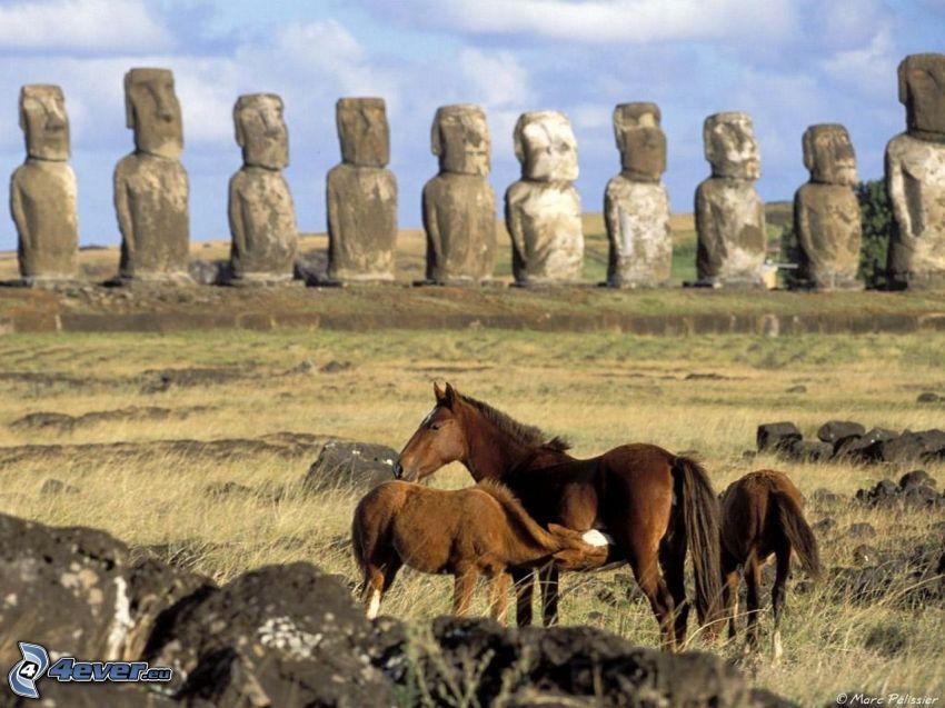 barna lovak, húsvét-szigetek
