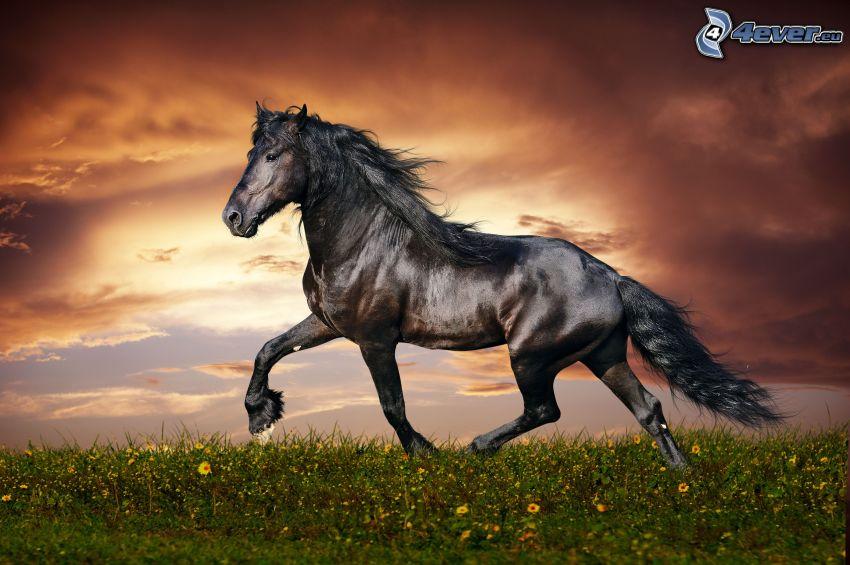 fekete ló