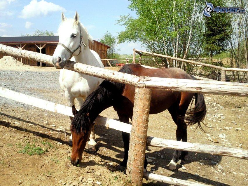ló, kerítés, istálló