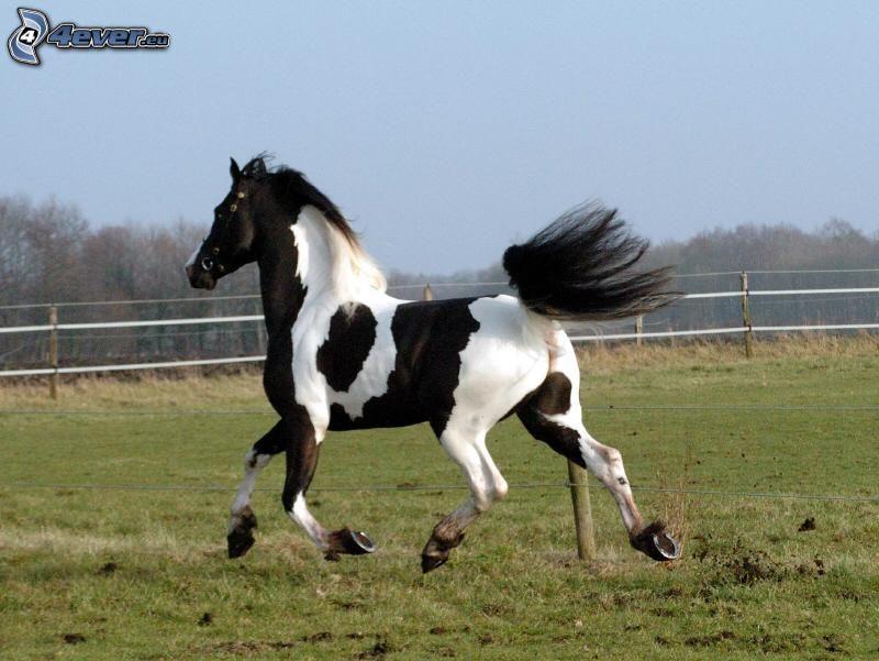 ló a réten