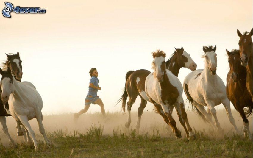 lovak, futó