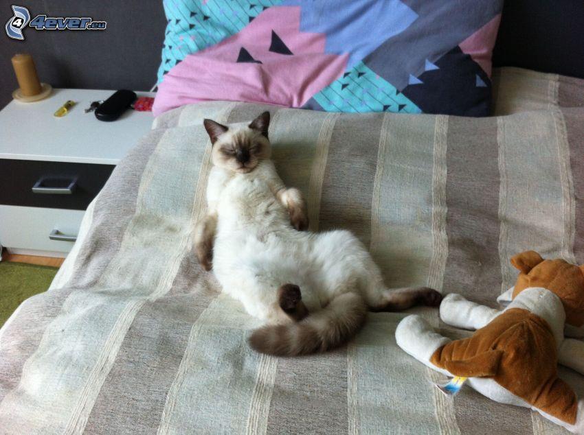 brit macska, alvás, ágy, plüss kutya