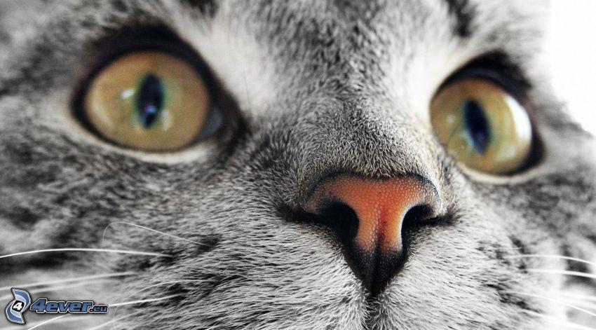 macska arc