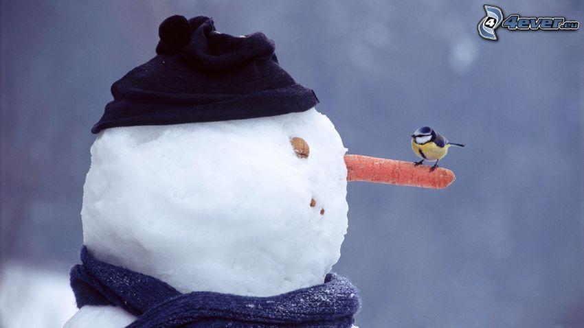 cinege, hóember, sárgarépa, sapka, sál