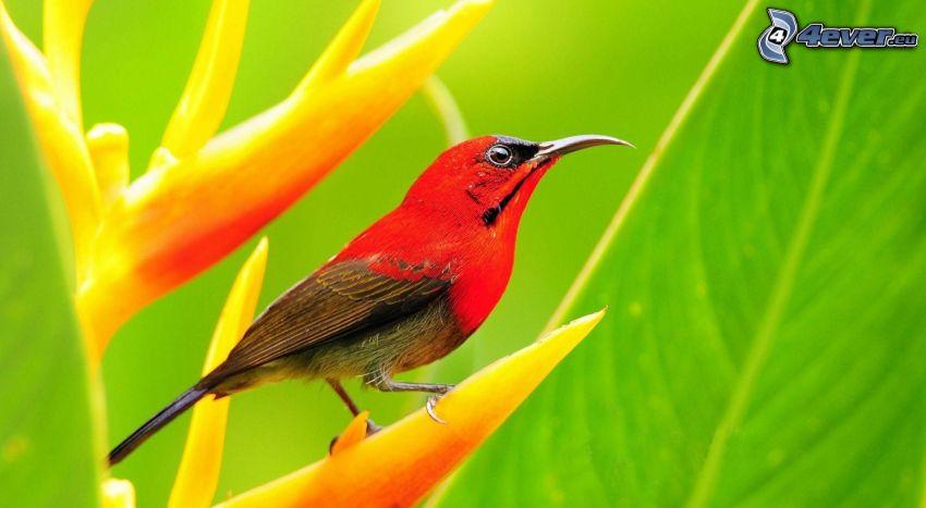 madár, virág