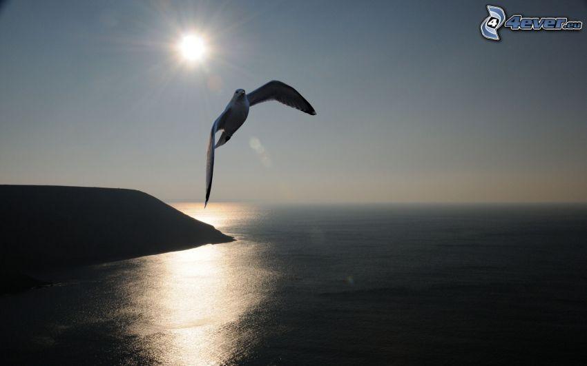 sirály, kliff, óceán, nap