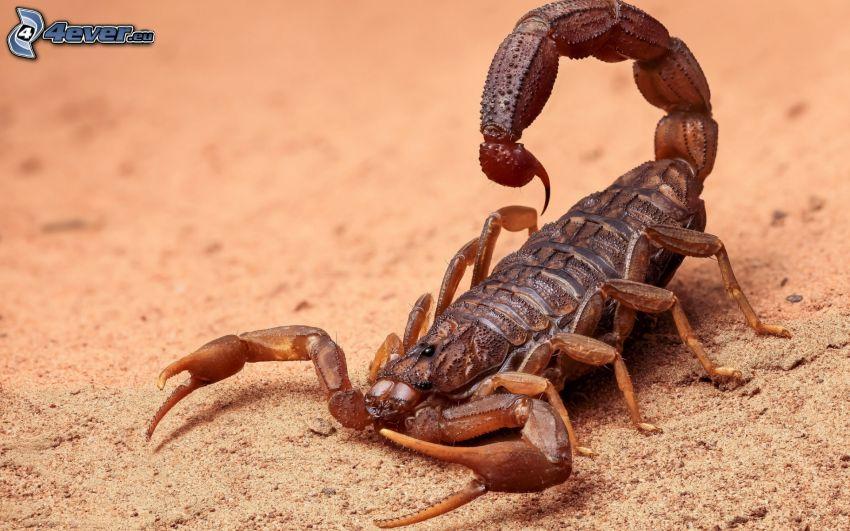 skorpió