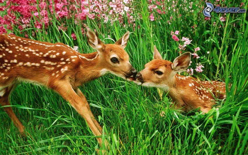 őzek, fű, rózsaszín virágok
