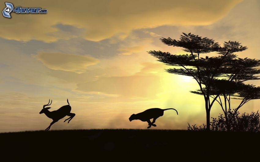 puma, antilop, sziluettek, fa sziluettje