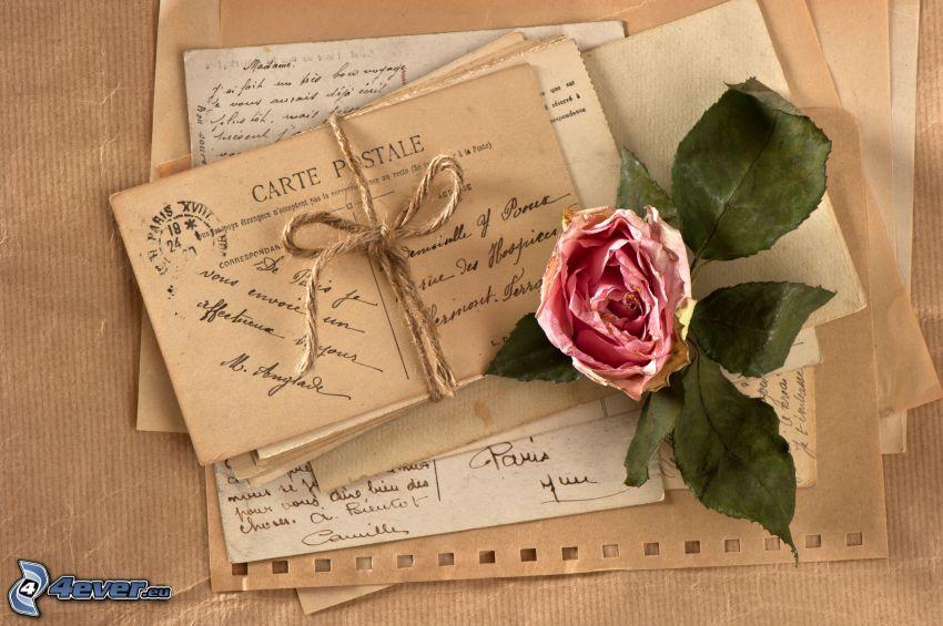 rózsaszín rózsa, levél, posta